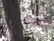 小树林系列
